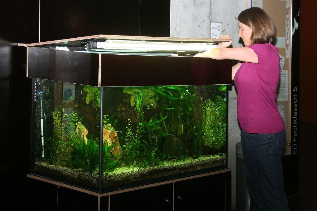 Unterhalt des Aquariums